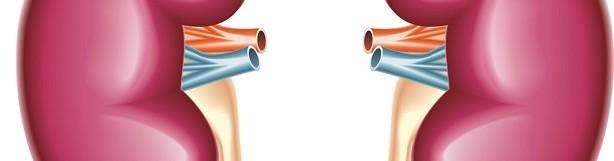 УЗД нирок і надниркових залоз